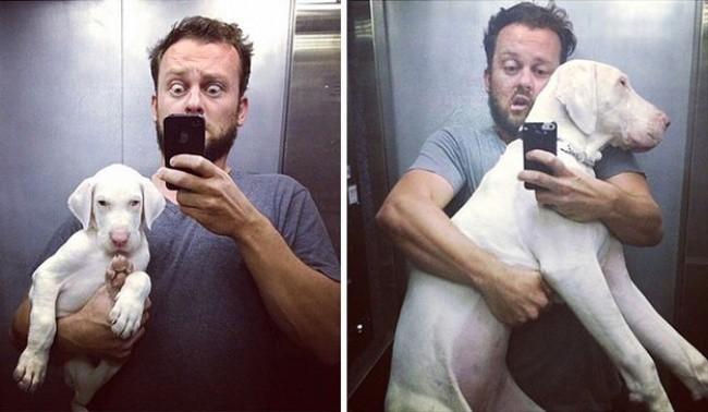 15 bức ảnh cảm động chứng minh chó là động vật trung thành nhất hành tinh ảnh 14
