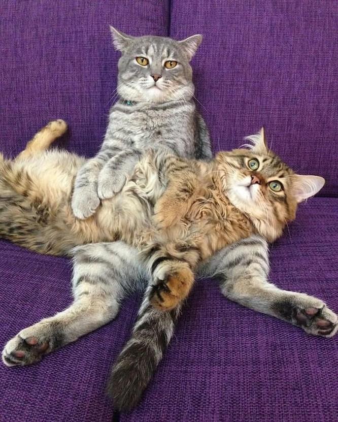 15 hình ảnh vui nhộn chứng minh mèo là diễn viên xuất sắc nhất ảnh 20
