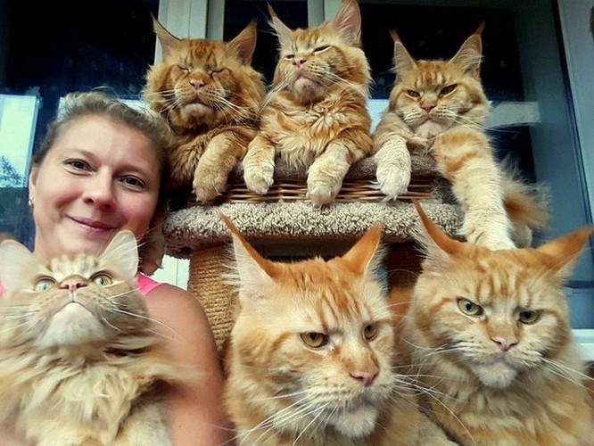 15 hình ảnh vui nhộn chứng minh mèo là diễn viên xuất sắc nhất ảnh 4
