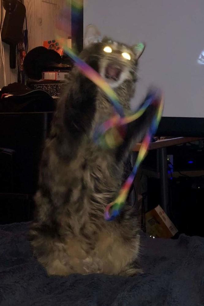 15 hình ảnh vui nhộn chứng minh mèo là diễn viên xuất sắc nhất ảnh 5