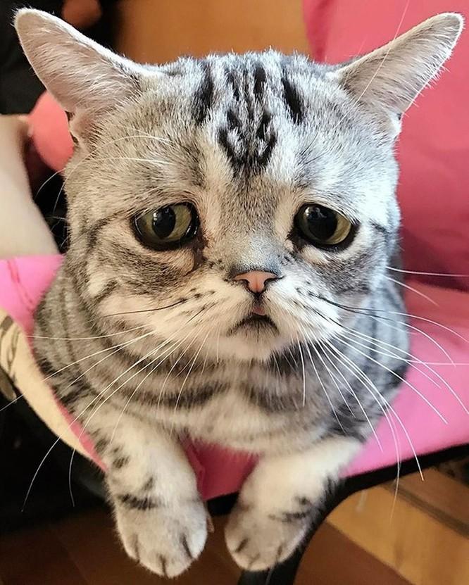15 hình ảnh vui nhộn chứng minh mèo là diễn viên xuất sắc nhất ảnh 7
