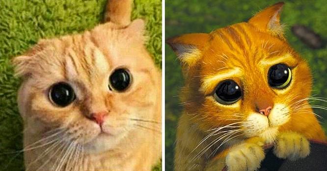 15 hình ảnh vui nhộn chứng minh mèo là diễn viên xuất sắc nhất ảnh 9