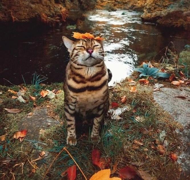 15 hình ảnh vui nhộn chứng minh mèo là diễn viên xuất sắc nhất ảnh 6