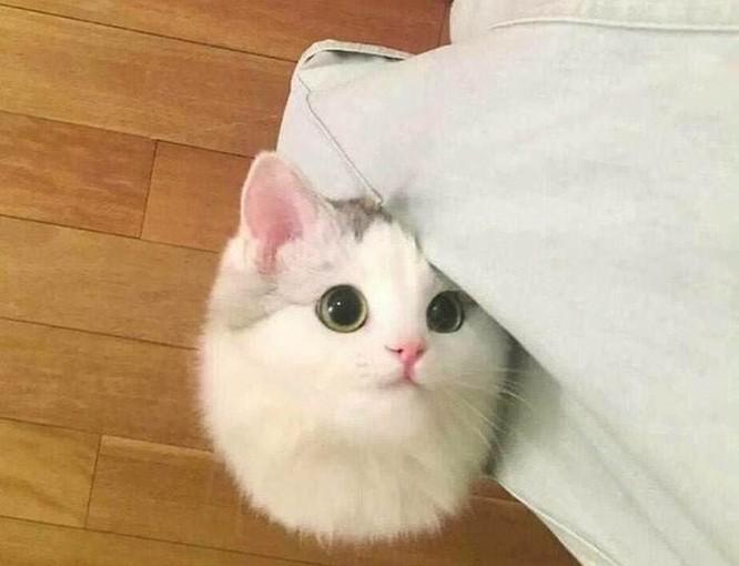 15 hình ảnh vui nhộn chứng minh mèo là diễn viên xuất sắc nhất ảnh 8