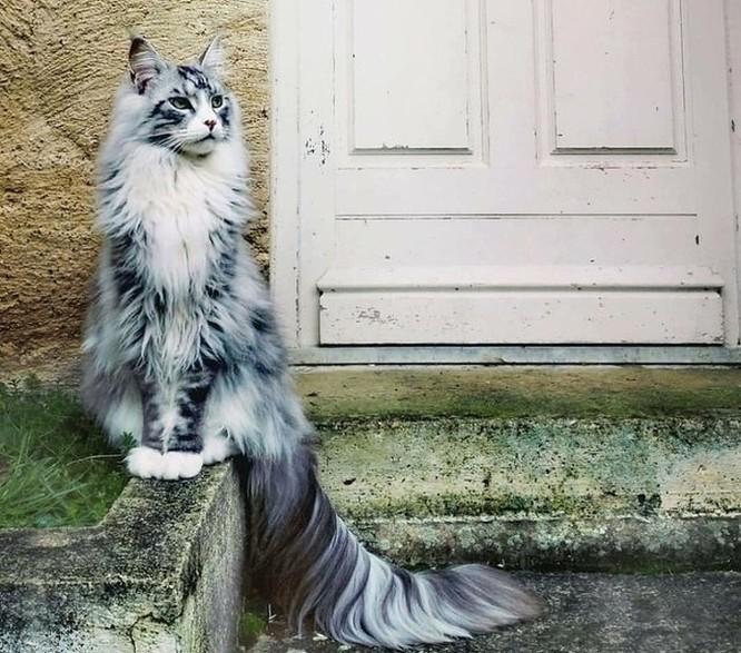15 hình ảnh vui nhộn chứng minh mèo là diễn viên xuất sắc nhất ảnh 2