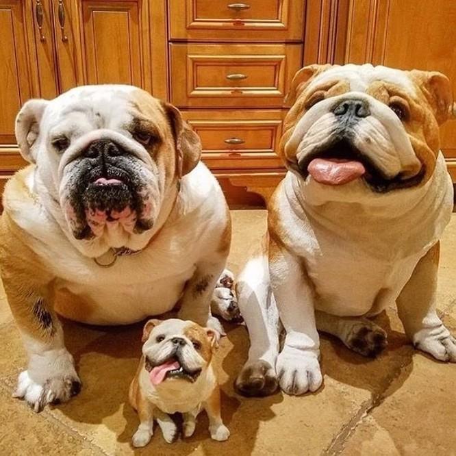 14 hình ảnh gia đình động vật khiến ai cũng phải ngưỡng mộ ảnh 2