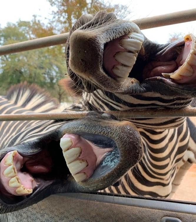 15 bức ảnh hài hước khiến cuộc sống của bạn tươi sáng hơn ảnh 5