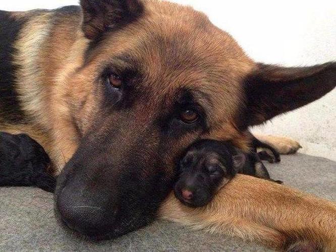 14 hình ảnh gia đình động vật khiến ai cũng phải ngưỡng mộ ảnh 4