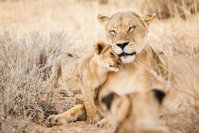 14 hình ảnh gia đình động vật khiến ai cũng phải ngưỡng mộ ảnh 7