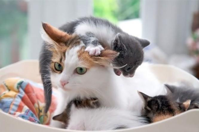 14 hình ảnh gia đình động vật khiến ai cũng phải ngưỡng mộ ảnh 1