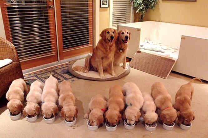 14 hình ảnh gia đình động vật khiến ai cũng phải ngưỡng mộ ảnh 8