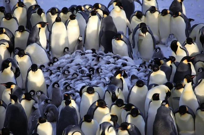 14 hình ảnh gia đình động vật khiến ai cũng phải ngưỡng mộ ảnh 5