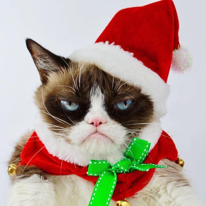 15 hình ảnh chứng minh không phải thú cưng nào cũng hào hứng với Giáng sinh ảnh 4