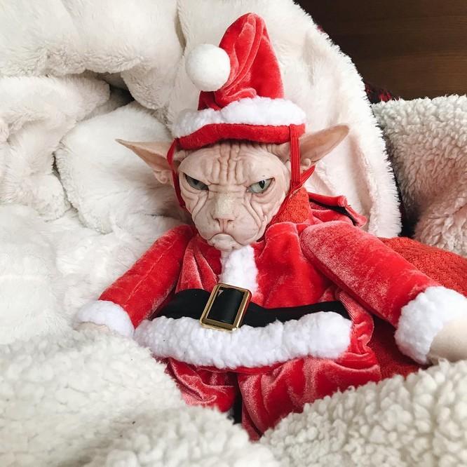 15 hình ảnh chứng minh không phải thú cưng nào cũng hào hứng với Giáng sinh ảnh 11