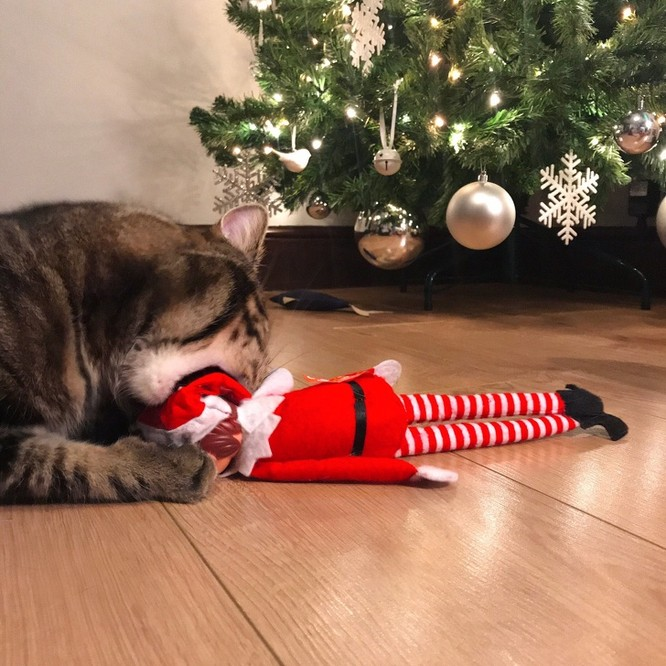 15 hình ảnh chứng minh không phải thú cưng nào cũng hào hứng với Giáng sinh ảnh 15