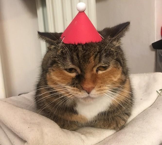 15 hình ảnh chứng minh không phải thú cưng nào cũng hào hứng với Giáng sinh ảnh 5