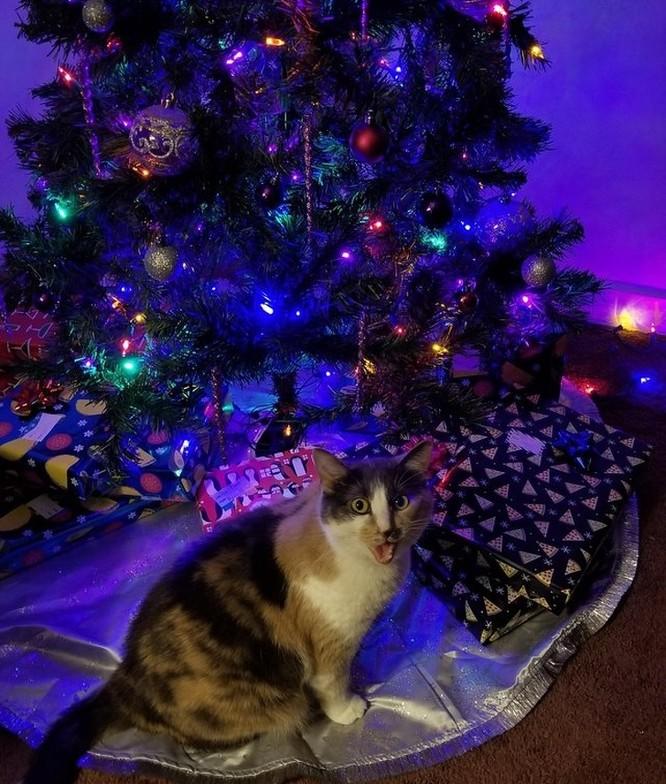 15 hình ảnh chứng minh không phải thú cưng nào cũng hào hứng với Giáng sinh ảnh 10