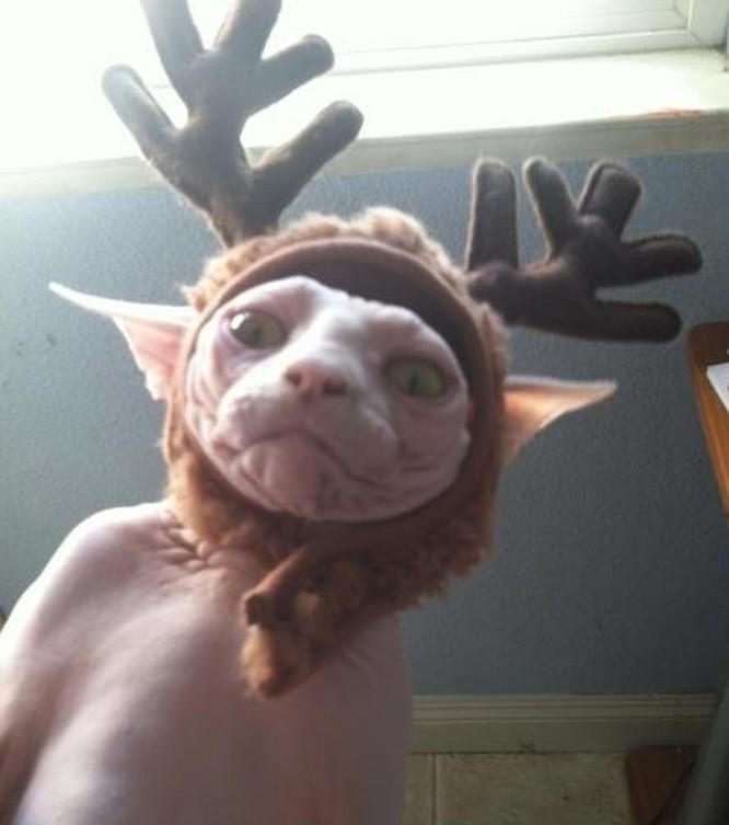 15 hình ảnh chứng minh không phải thú cưng nào cũng hào hứng với Giáng sinh ảnh 2