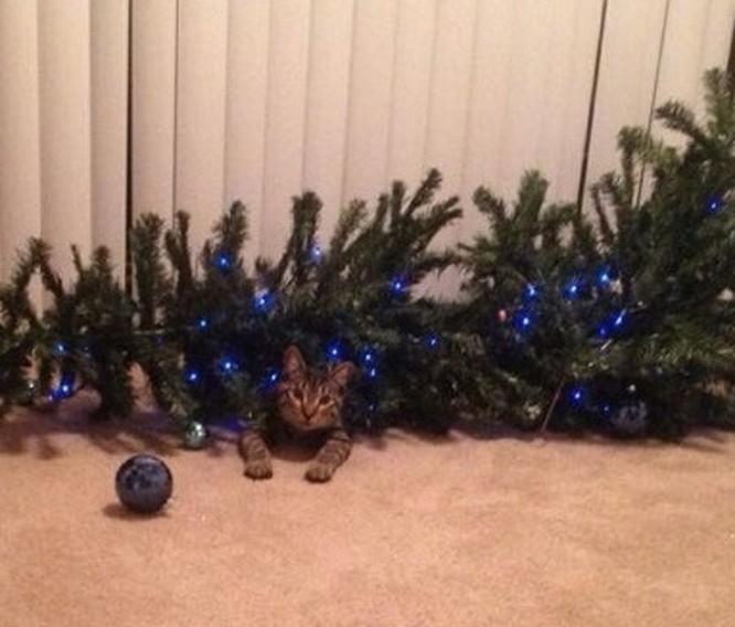 15 hình ảnh chứng minh không phải thú cưng nào cũng hào hứng với Giáng sinh ảnh 8