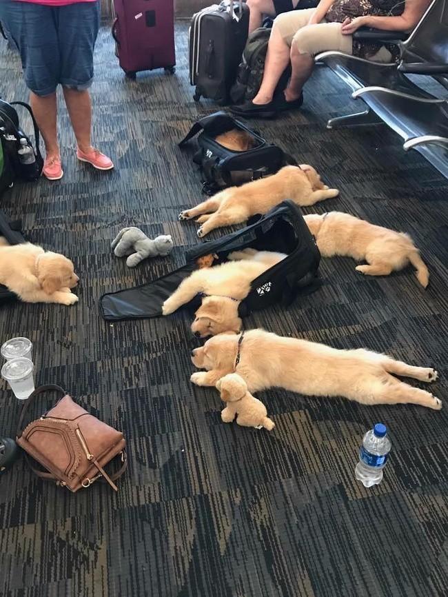 16 hình ảnh hài hước chỉ có thể xảy ra ở sân bay ảnh 13