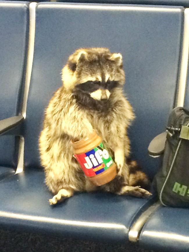 16 hình ảnh hài hước chỉ có thể xảy ra ở sân bay ảnh 4