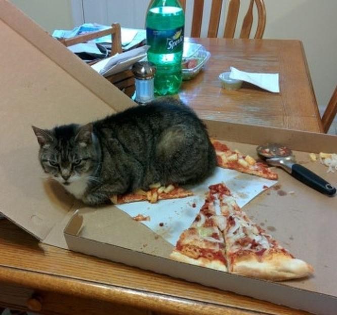 17 bức ảnh minh chứng logic cực kỳ hài hước của loài mèo ảnh 17