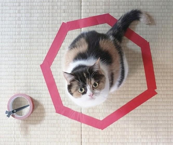 17 bức ảnh minh chứng logic cực kỳ hài hước của loài mèo ảnh 16