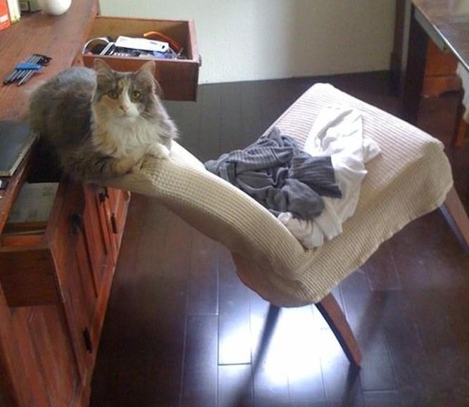 17 bức ảnh minh chứng logic cực kỳ hài hước của loài mèo ảnh 18
