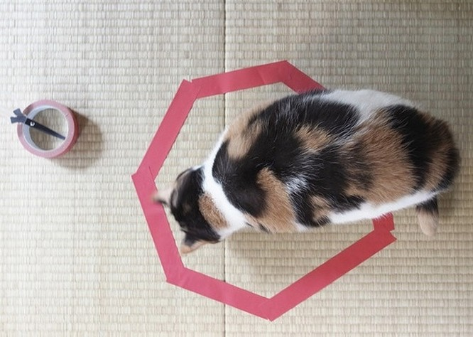 17 bức ảnh minh chứng logic cực kỳ hài hước của loài mèo ảnh 15