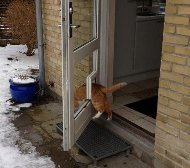 17 bức ảnh minh chứng logic cực kỳ hài hước của loài mèo ảnh 9