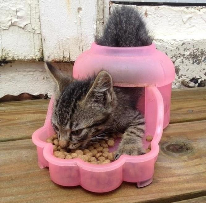 17 bức ảnh minh chứng logic cực kỳ hài hước của loài mèo ảnh 10