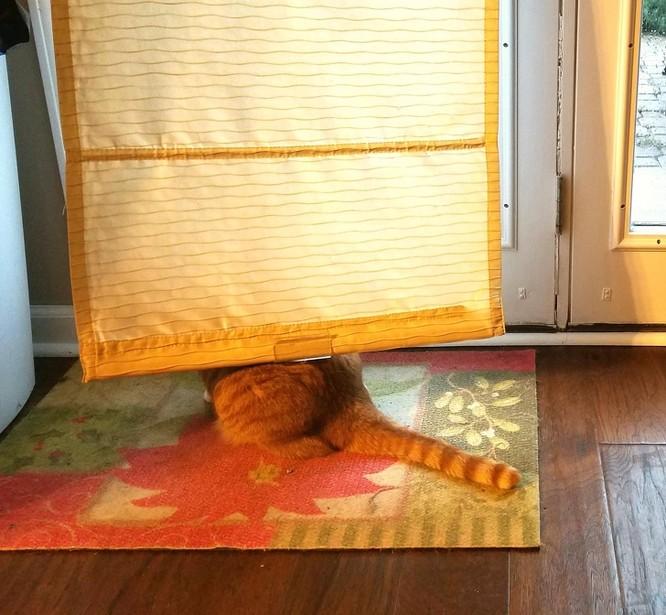 17 bức ảnh minh chứng logic cực kỳ hài hước của loài mèo ảnh 8