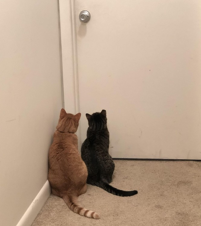 17 bức ảnh minh chứng logic cực kỳ hài hước của loài mèo ảnh 7