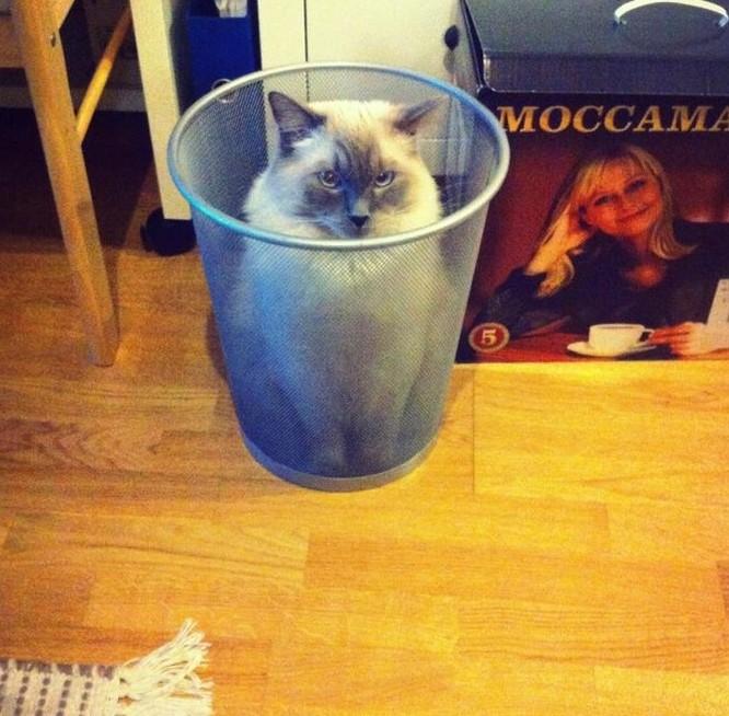 17 bức ảnh minh chứng logic cực kỳ hài hước của loài mèo ảnh 6