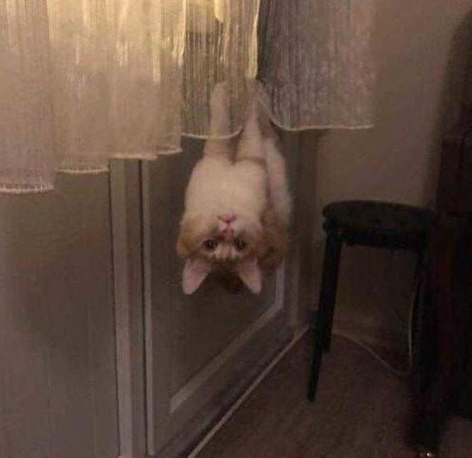 17 bức ảnh minh chứng logic cực kỳ hài hước của loài mèo ảnh 5
