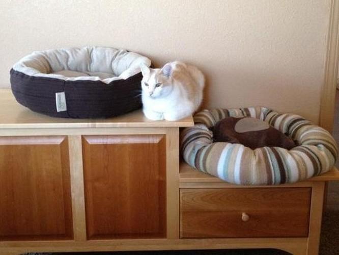 17 bức ảnh minh chứng logic cực kỳ hài hước của loài mèo ảnh 4
