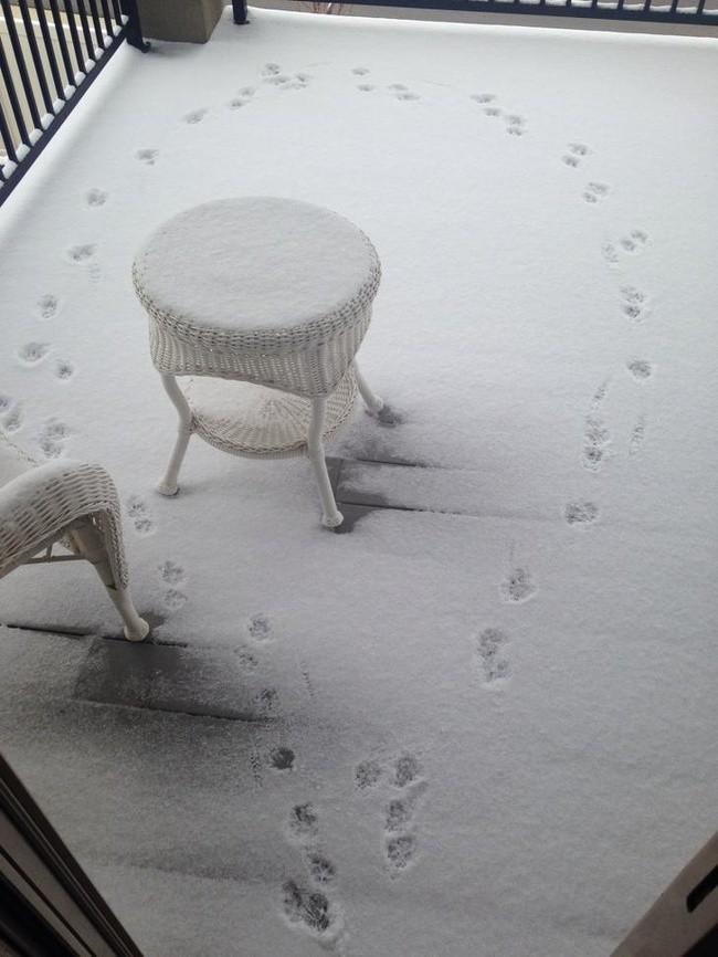 15 bức ảnh chứng minh mùa đông là một thách thức cực lớn ảnh 1