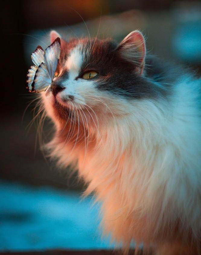 15 ảnh chụp động vật có khoảnh khắc hoàn hảo khiến bạn bối rối ảnh 15