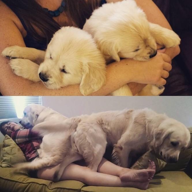 15 bức ảnh cảm động về quá trình trưởng thành của cún con ảnh 12