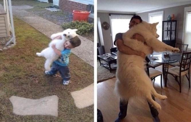 15 bức ảnh cảm động về quá trình trưởng thành của cún con ảnh 6