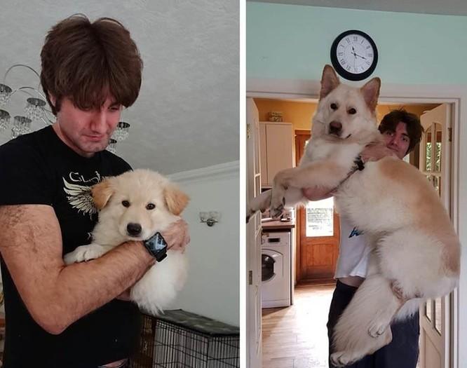 15 bức ảnh cảm động về quá trình trưởng thành của cún con ảnh 3
