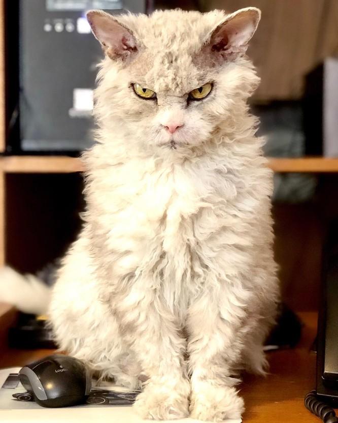 15 hình ảnh chứng minh mèo là loài khó tính nhất hành tinh ảnh 15