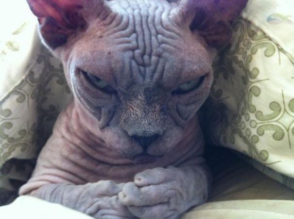 Chùm ảnh chứng minh lõAi mèo chính là hía»‡n thân của... quá»· dữ! - Ảnh 7.