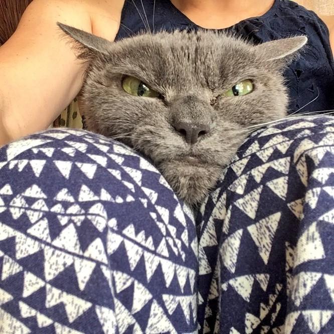 15 hình ảnh chứng minh mèo là loài khó tính nhất hành tinh ảnh 9
