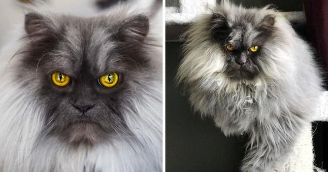 15 hình ảnh chứng minh mèo là loài khó tính nhất hành tinh ảnh 2
