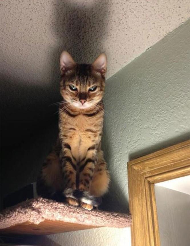 15 hình ảnh chứng minh mèo là loài khó tính nhất hành tinh ảnh 11
