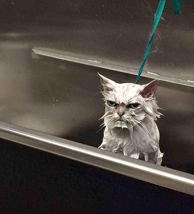 15 hình ảnh chứng minh mèo là loài khó tính nhất hành tinh ảnh 6