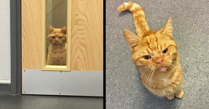 15 hình ảnh chứng minh mèo là loài khó tính nhất hành tinh ảnh 14