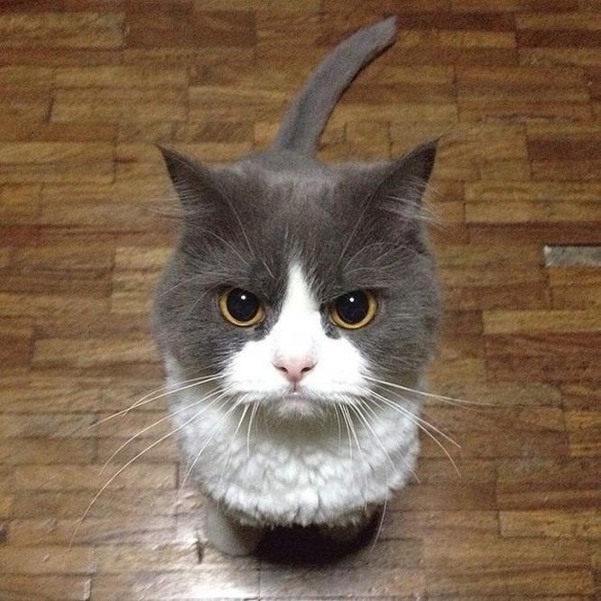 15 hình ảnh chứng minh mèo là loài khó tính nhất hành tinh ảnh 5