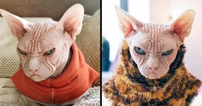 15 hình ảnh chứng minh mèo là loài khó tính nhất hành tinh ảnh 4